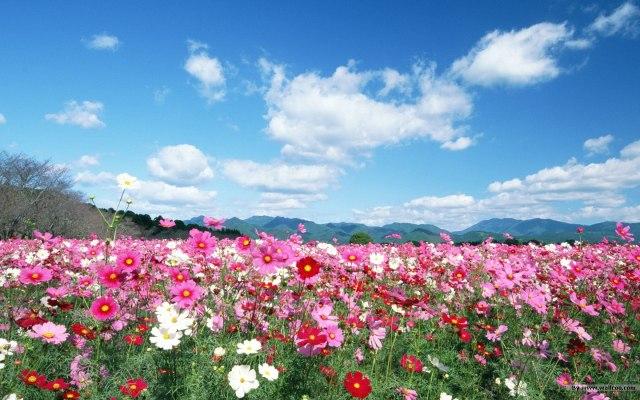 flowersfield-flowers-image----golden-age-of-gaia-ektxqjm4